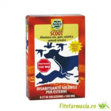 Scoot REP 01 100 mp